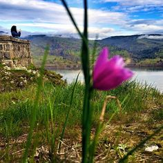 @Travel Oregon // A springtime view from Memaloose Overlook in the Columbia River Gorge. Photo by Seattle Dredge.
