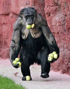 Monkeys-Rule-The-World-5
