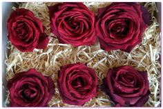 Red Rose Heads Freeze Dried Flowers, Fresh Flowers, Dried Flower Bouquet, Freeze Drying, The Fresh, Red Roses, Frozen, Vibrant, Shapes