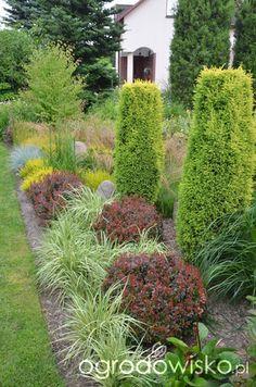 Kolorowy ogród na piasku - strona 469 - Forum ogrodnicze - Ogrodowisko