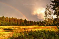I shot from last summer. I hope this summer will be just as awesome.  © COPYRIGHT The work contained in my gallery is copyrighted.  #field #rainbow #summer #trees #warm #ligh #beautiful #gorgeous #view #forest #landscape #sky #clouds #finland #scandinavia #lovely #suomi #sateenkaari #pelto #kesä #lämpö #valokuvaus
