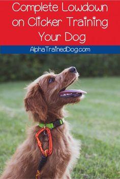 Puppy Dog Potty training… #dogtrainer Dog Training Methods, Dog Training Techniques, Best Dog Training, Training Pads, Training Schedule, Training Classes, Brain Training, Training Videos, Dog Clicker Training