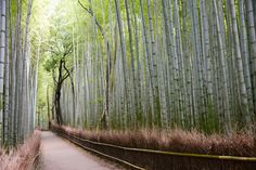 Japón Arashiyama Bamboo Grove:El Arashiyama Bamboo Grove se trata de un gigantesco bosque de bambú, pero no un bosque cualquiera, sino de uno perfectamente adaptado para las numerosas visitas que se reciben aquí durante todo el año. El bosque ocupa una extensión de 16 kilómetros cuadrados comunicados por larguísimos caminos rodeados de inmensos arboles de bambú que casi no dejan que entre la luz y parezcan gigantes paredes puestas ahí estratégicamente.