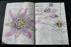 Manuscript: 'Moeilijke bloemenboek', illustration trudy beekman