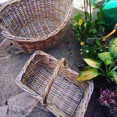 Am I the only one who gets excited over handmade whicker baskets? 😊. .  Yesterday was a bit of a village jaunt of stopping off at the market Garden for a few plants to replenish a bare bank in my garden and going to the farm shop for some indulgent goodies and a picnic; but on the way I passed a local Victorian hardware tiny shop and outside the front was every size and shape whicker baskets for every use! . For me that is an Alladin's cave! Though only being allowed to stand at the…