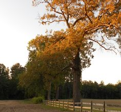 """Still Waters--Notes from a Virginia Shire: """"The Tao of Autumn"""""""