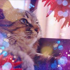 Good night. #cat  #cameranapp - @jimako123- #webstagram