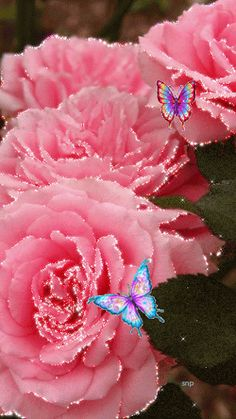 Fatima Raza_Glimmering roses and butterflies Roses Gif, Flowers Gif, Beautiful Rose Flowers, Beautiful Gif, Butterfly Flowers, Beautiful Butterflies, Amazing Gifs, Rosa Rose, Colorful Roses