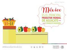 México es el principal productor mundial de aguacate y pimiento morrón.SAGARPA SAGARPAMX #MéxicoSiembraÉxito