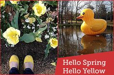 Hello Spring! Hello Yellow! - Hello Spring!  Hello Yellow Flowers / Yellow Shoes / Giant Yellow Inflatable Duck. I went to Canberra's Floriade festival and here are some fave photos.  #canberra #cbr #floriade #flowers #hello #spring #sunshine #yellow - Find more design, photography and craft at Red Instead. www.redinstead.com.au