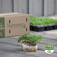 Grass & Grass Seed at Lowes.com Bermuda Sod, Lawn Sod, Zoysia Sod, St Augustine Grass, Grass Seed Types, Lawn Care Tips, Lawn And Garden, Seeds, Gardening