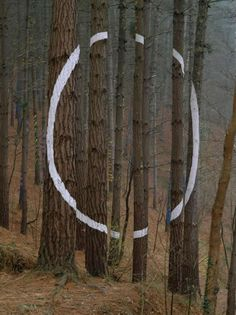 The Forest of Oma, Basque Country | Spain The forest of Oma, one of Basque artist Agustín Ibarrola's best known works.