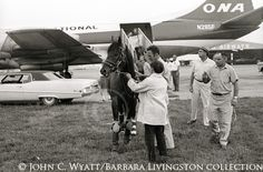 The 1968 English and Irish Horse of the Year,SIR IVOR, arrives at Blue Grass Field in Lexington, KY, on July 14, 1970.  Then 5, Sir Ivor too...
