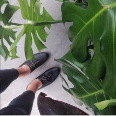 Nisolo Oxford Shoes Handmade leather oxfords. Classic, masculine lines softened to create a fresh, feminine style. Nisolo Shoes Flats & Loafers