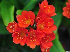 12736d1270077792-orange-flowers-orange-flowers.jpg (1024×768)