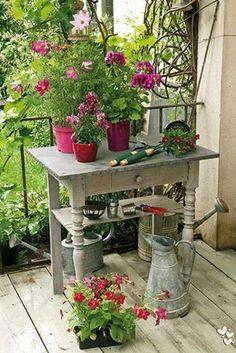 Dans les vieux pots les fleurs !