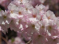 Royal Botanical gardens May 2013 | Flickr - Photo Sharing!