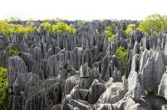 Une forêt de pics de calcaire se dresse vers le ciel dans ce parc naturel de Madagascar Tsingy de Bemaraha