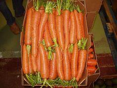Zanahoria variedad Bangor, de La Padilla