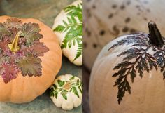 How-To: Botanical Pumpkins at Terrain