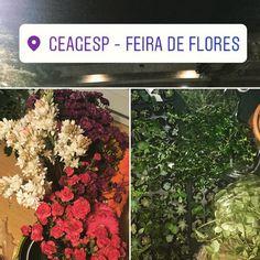 Hoje a noite foi de suculentas e flores no CEAGESP  #oitominhocas #feiradeflores #ceagesp #suculenta #suculovers