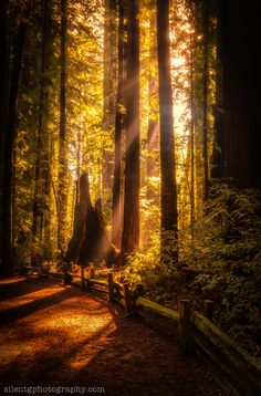 Henry Cowell Redwoods by Mark Gvazdinskas, via 500px; Santa Cruz, California