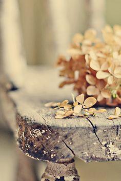 Hydrangea flowers turn brown.
