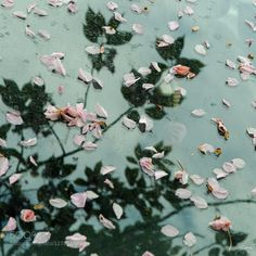 Abstraction Spring Petals - Pinned by Mak Khalaf Cherry petals fallen on a car windshield @iswimintime Nature VegetauxAbstractArtCarCherryColorsElementsFleursFlowerPetalsPinkReflectionRefletsRomantic by iswimintime