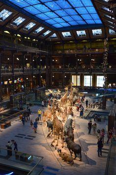 Museum exhibit . Paris