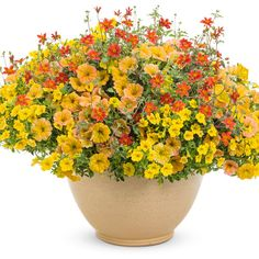 Proven Winners - Honeybelle combination container recipe containing Campfire® Fireburst - Bidens hybrid, Superbells® Yellow - Calibrachoa hybrid, Supertuni. Large Plants, All Plants, Petunia Flower, Plants For Hanging Baskets, Fall Containers, Proven Winners, Garden Journal, Plant Images, Container Design