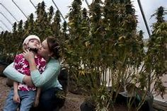 charlotte's web cannabis - Bing images