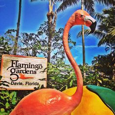 The 60 acres... -Flamingo Gardens, Davie - Sun Sentinel