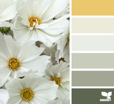 Colors | Combos | Palettes | Color Snap App | Sherwin-Williams | June Day | Queen Anne's Lace | Pure White | Silver Strand | Coastal Plain | Pewter Green