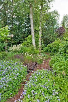 Wander in your own forest garden, with a little garden it is really possible! Forest Garden, Garden In The Woods, Garden Paths, Garden Landscaping, Homestead Gardens, Farm Gardens, Outdoor Gardens, Paradise Garden, Dream Garden
