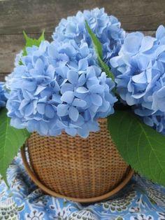 Very Beautiful Flowers, Amazing Flowers, Pretty Flowers, Nice Flower, Different Types Of Flowers, Blue Hydrangea, Yellow Flowers, Purple Yellow, Coastal Decor