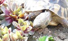 Kräuterfutter für Landschildkröten