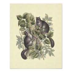 Cute Gray Squirrels in Oak Tree Poster from Antique Engraving