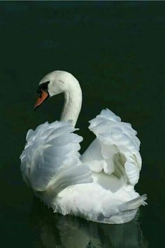 Magnificent birds of beauty.