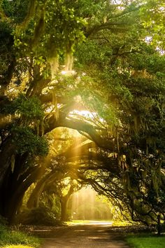 ***Boone Hall Plantation, Charleston, SC