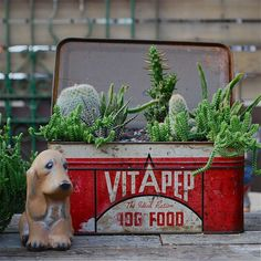 garden in a vintage tin box