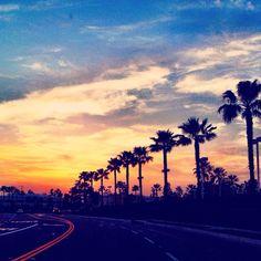 Sunset. Palm trees