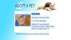 Adopt a Pet Tuesday: Freya, Belle & Hank - Northern Michigan's News Leader