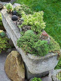 rectangular hypertufa trough with plants
