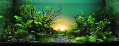 TBAC2013 - Thailand Best Aquascaper Contest 2013 by ADA Thailand
