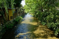 Gion, Shira-Kawa River (Kyoto) / 祗園・白川(京都)