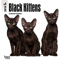 Black Kittens 2018 Calendar 7 x 7 Inch Monthly Mini Wall Calendar, Animal Cat Kitten Feline (Multilingual Edition)