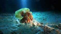 Sea Crab Spotted on a Night Dive
