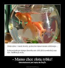 welon złota rybka - Szukaj w