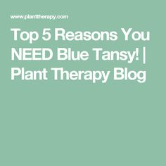 Top 5 Reasons You NEED Blue Tansy! | Plant Therapy Blog Blue Tansy Essential Oil, Essential Oils, Plant Therapy, Health And Beauty, Essentials, Pure Products, Blog, Herbs