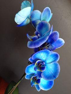 Blue orchid Unusual Flowers, Beautiful Flowers, Tiffany Blue Weddings, Blue Wedding Flowers, Blue Orchids, Anime Artwork, Botanical Art, Architecture Art, House Plants